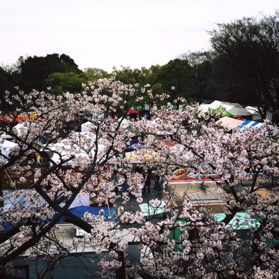 春風,harukaze,春風2016