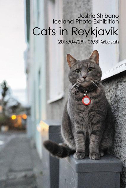 Cats in Reykjavik @Lasah