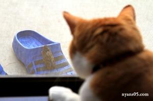 猫 茶白猫 ちゃだぞう茶トラ