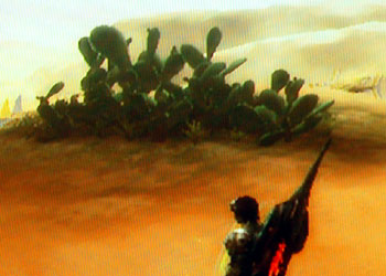 砂原のサボテン