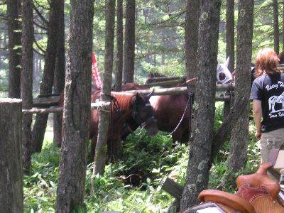 馬を身近に感じられるのが草競馬の魅力