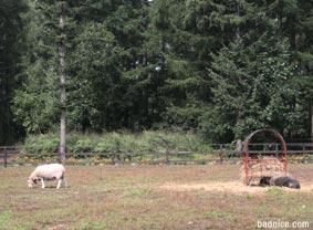 エンドルフィンの羊が2引き