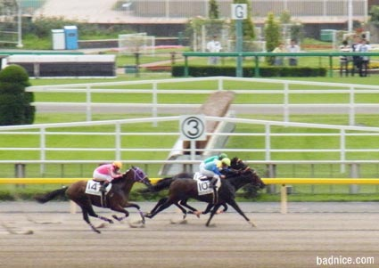 6/23最終レース