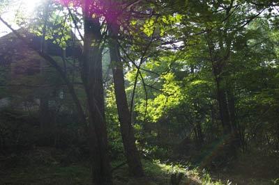 朝、真っ暗な森に太陽が差すと、緑の楽園になるのです。