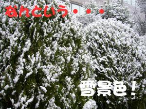 福岡 2009 大雪
