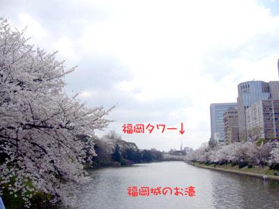 大濠公園 2009 桜