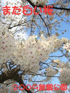 大濠公園 舞鶴公園 2009 桜