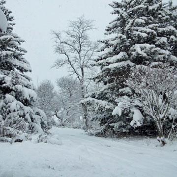 今の家の前・雪景色