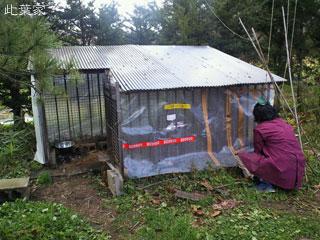 とうとう あひる小屋にビニールを巻く季節がやって来ました〜。