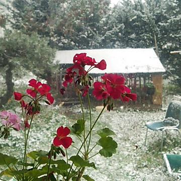 雪が降ってます。