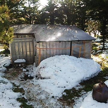 あひる小屋の冬支度