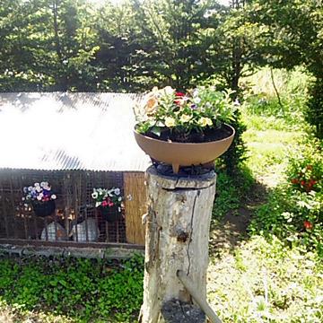 高い位置に花鉢を設置出来ました。