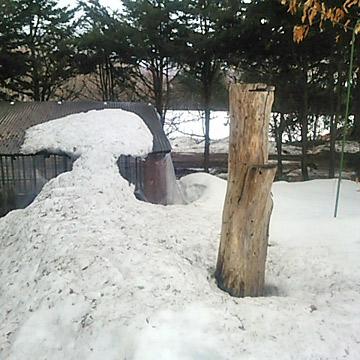 枯れ木の大木