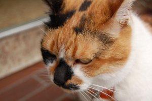 中華街の猫2