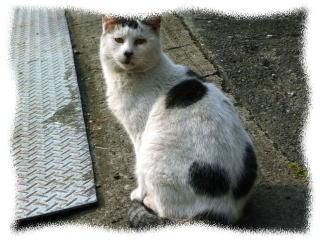 消防署近くに住む 野良猫さん なんか哲学的な顔してますよね