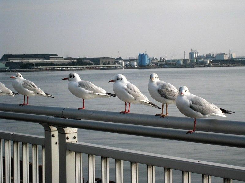 名古屋港-05