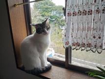 窓辺のカン太