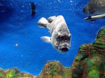 おさかな館の水槽で泳ぐ魚(お魚の名前は?)