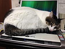 パソコンの上からどかないカン太