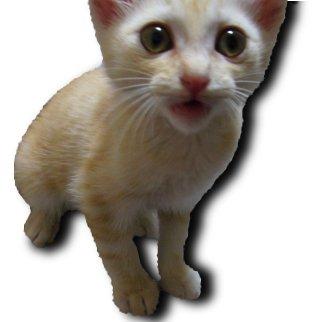 子猫にドロップシャドウ