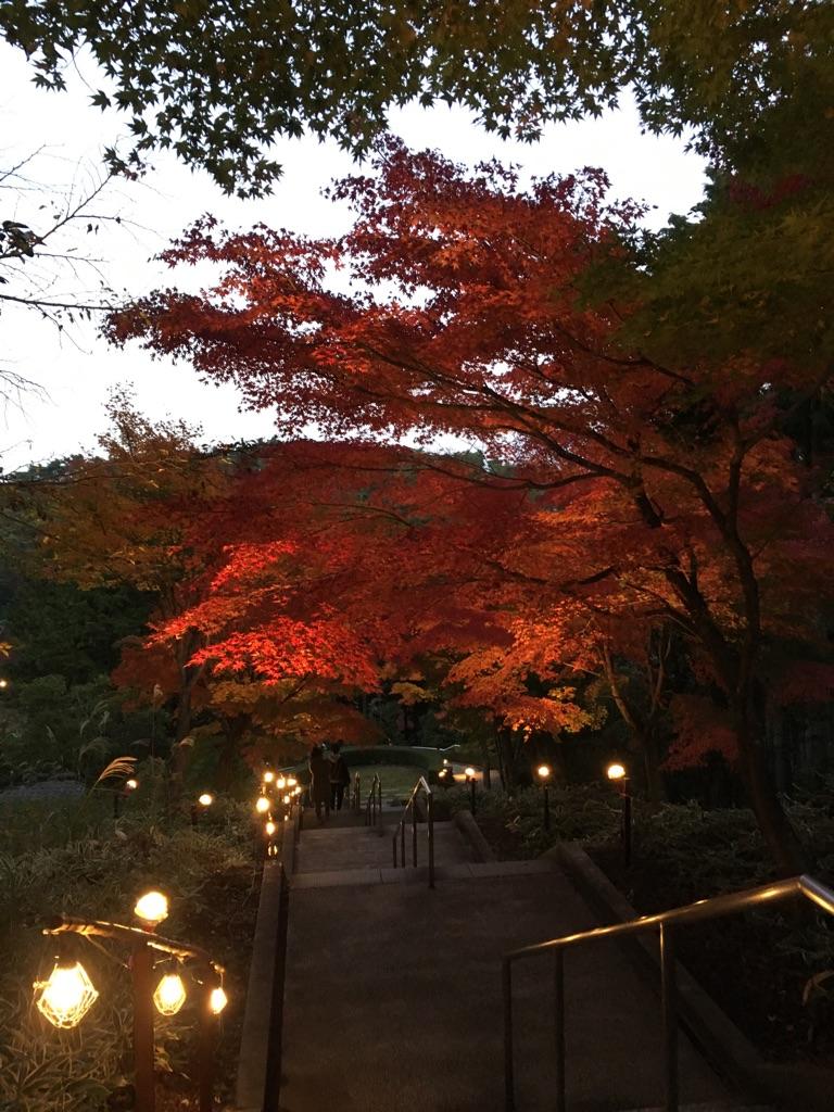 虹の郷ライトアップtags[静岡県]