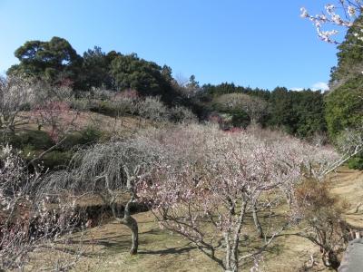 春が近づいてますtags[静岡県]