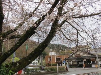 修善寺温泉の桜・お花tags[静岡県]