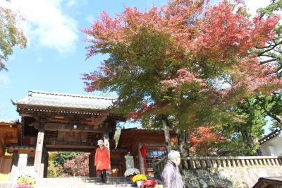 The Shuzenji hot-spring resort colored leaves situation