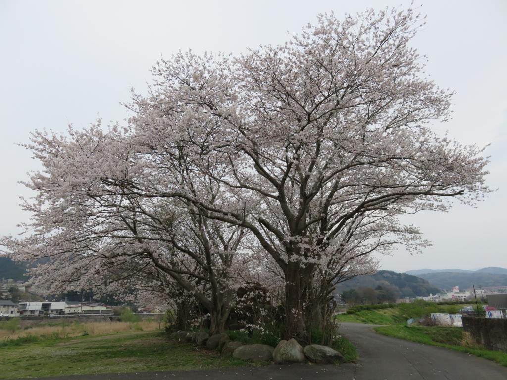 モガワ裏堤防.JPG