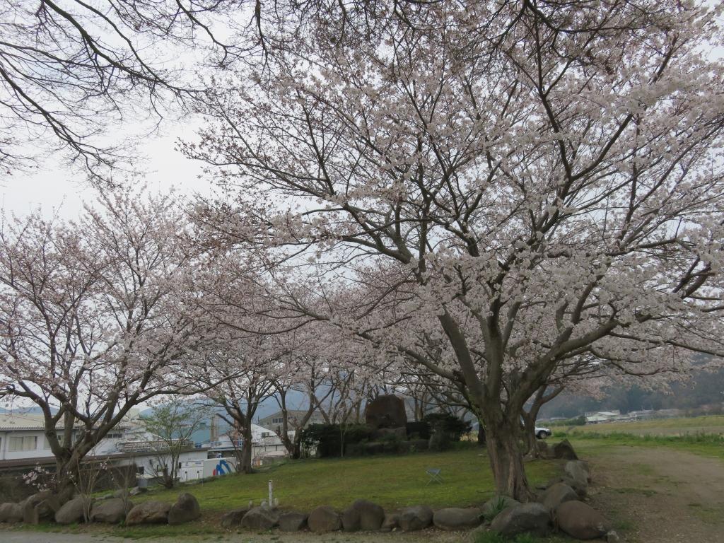 モガワ裏堤防4.JPG