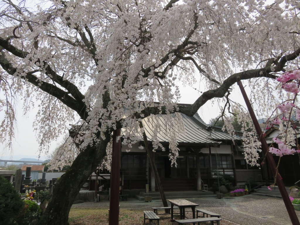 西念寺4.JPG