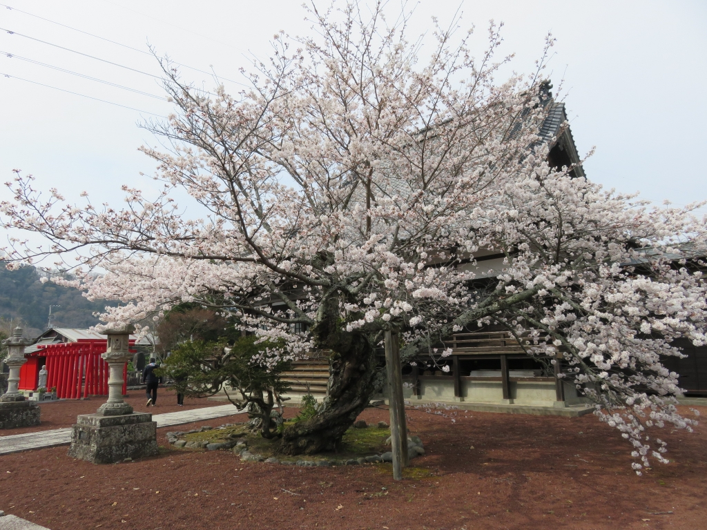 妙国寺5.JPG