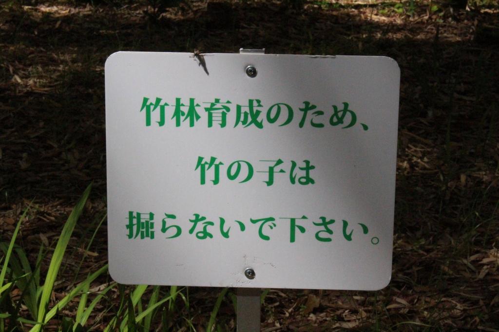 IMG_6484.JPG