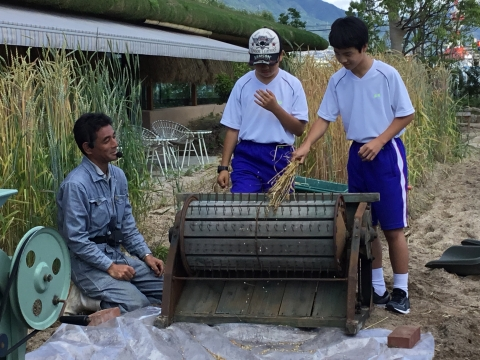 麦を穂と実に分ける作業に挑戦.JPG