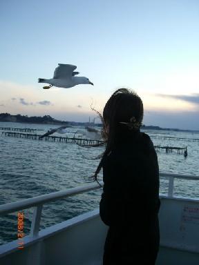 松島の観光船。説明は聞かずにかもめに餌をくれる。
