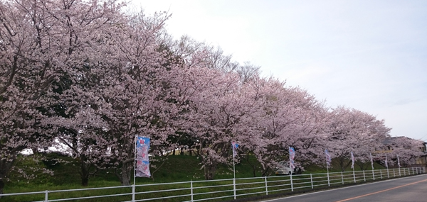 「桜画像 4/5」の画像検索結果