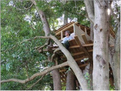 大分県中津市三光のコスモス園に生えている木々の上に建てる家「ツリーハウス」が出現。設置はコスモス祭りが終わる30日までの期間限定。お客さん情報では、コスモスの見どころは10月下旬♡