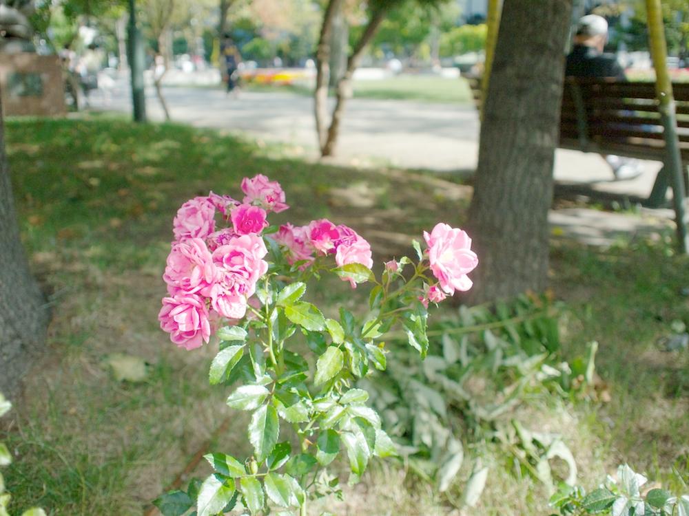 P9162550.jpg
