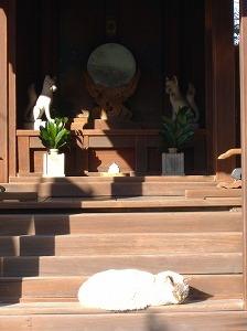 神社にいる猫って怖いんだけど。