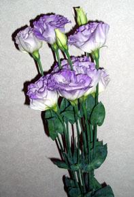 花 フラワー