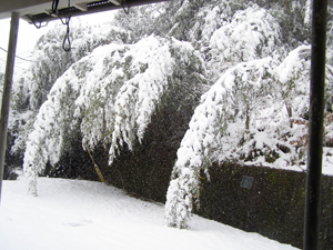 2010.12.31-no1