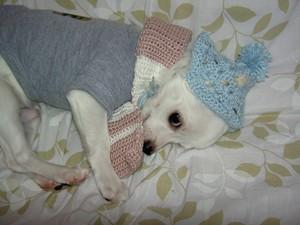 冬眠します。