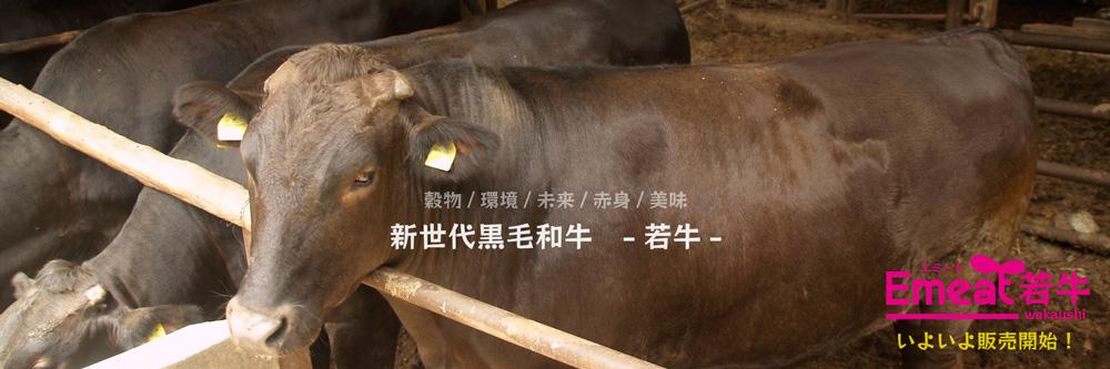 新世代黒毛和牛-若牛-