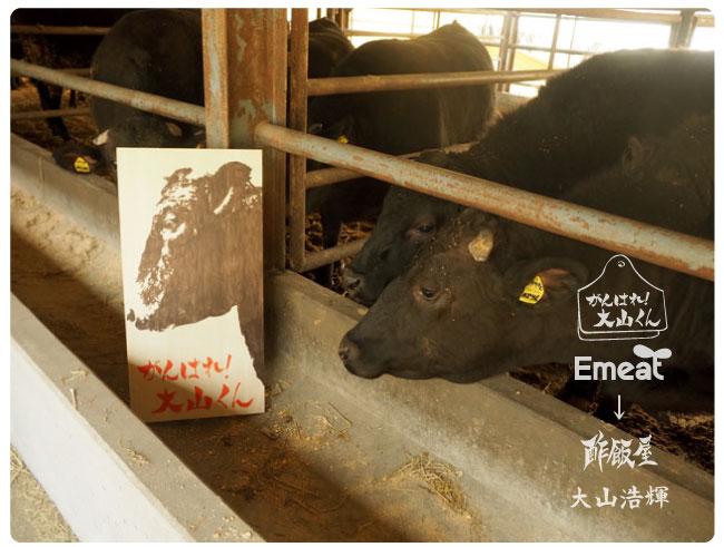 Emeat-blog-tamasi-10.jpg
