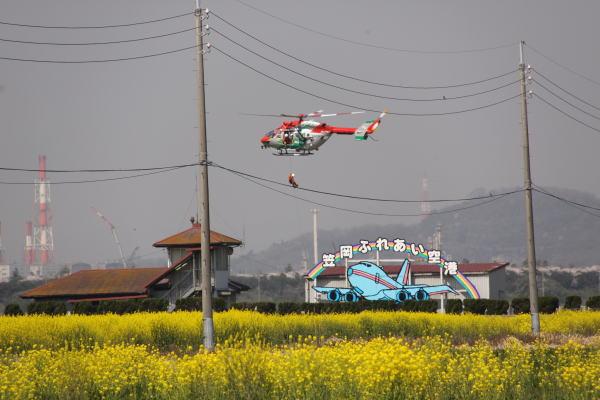 菜の花畑2009
