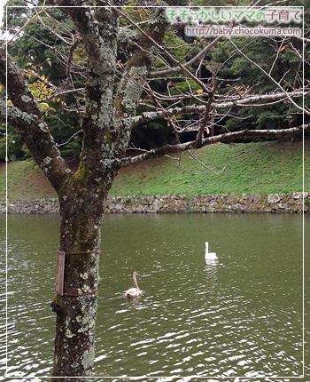 彦根城近くの美しい庭園