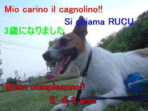rucu_37.jpg