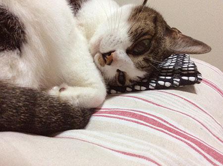 ねこ落ち着いて寝てる