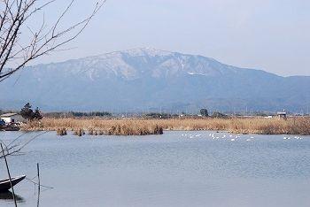 ハクチョウと松ノ木内湖・蛇谷ヶ峰(902m)