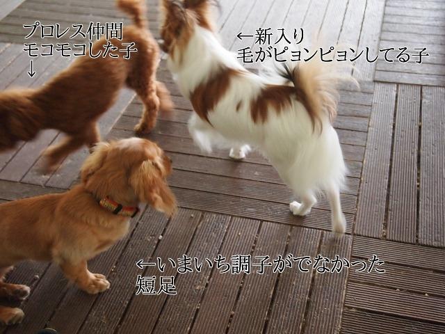 新しいイメージ11.JPG